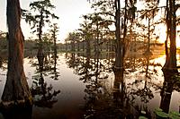 Caddo Lake, Texas at sunrise