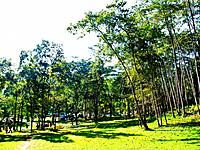 Camping field in the forest of Huay Nam Dung Natonal Park in Chiang Mai, Thailand.