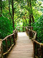 Wooden path way among the forest in Doi Inthanon in Chiang Mai, Thailand.