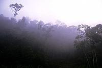 MADAGASCAR, PERINET RESERVE, RAIN FOREST WITH LAKE, EARLY MORNING FOG.