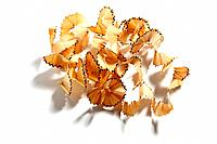 Pencil Shavings on White Background.