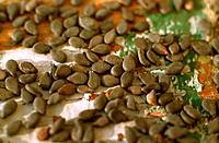 sesamum, sesame (Sesamum indicum var. nigrum, Sesamum indicum nigrum), seeds