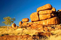 Devils Marbles - a ghost gum tree and three balanced rocks of almost perfect circular shape are located on top of a rock formation, amidst grassy bush...