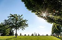 Single Tree and Sinking Sun on Magdalena Hill, Bad Schallerbach, Austria.
