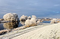 Winter landscape at river Elbe in Hamburg, Germany, Europe - 01/01/2011