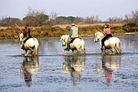 Camargue Horses - being ridden through water