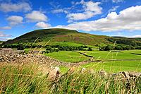 Kisdon Hill above Thwaite in Swaledale, Yorkshire Dales, England, UK.