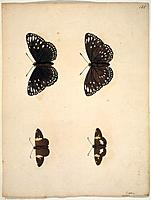 Butterflies, 18th century artwork. Plate from an album of unpublished watercolours of Lepidoptera (1720) by Eleazar Albin.