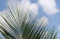 Palm leaf against sky