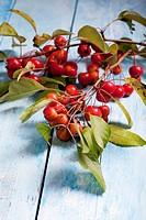 Ornamental apples
