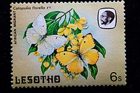 African migrant (Catopsilia florella), postage stamp, Lesotho, 1984 .| - Lesotho, 05/01/2007