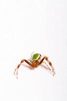 Crab spider - 02/11/2007