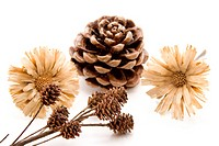 Pine cones with dry flowers