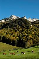 Switzerland, Canton Appenzell Innerrhoden, Appenzell Alps, cow pasture