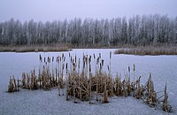Nature reserve Oostvaardersplassen in winter