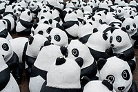 Pandas of the World Wildlife