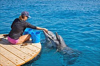 Trainer feeding fish to bottlenose dolphins at Dolphin Reef, Eilat, Israel.