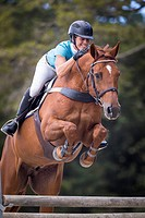 Hanoverian Horse. Chestnut gelding with rider jumping over an obstacle. New Zealand