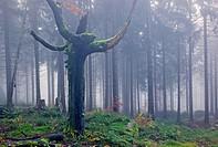 the Fichtelgebirge forest