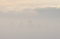 Morning Mist In Winter