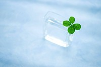 Four Leaf Clover in Vase