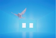 Pigeon flying in blue room, computer graphic