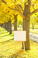 Blank artist?s easel by a row of ginkgo trees