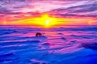 Polar bear, Artcic sunset.