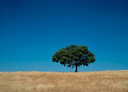A Tree Built on a Blue Sky and Grasslands