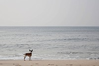 A Dog Beside the Seashore, Sylt, Germany