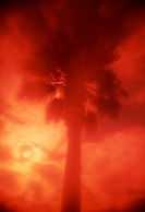 Palm Tree with Red Sunset in Background, Low Angle View