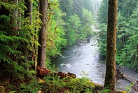 Sol Duc River, Olympic National Park, Washington.
