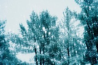 Snow flakes falling in front of trees.