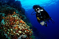 Diver on Rocky Islands, middle of red Sea, Egypt. Favia stelligera and Pseudanthias squamipinnis.