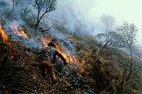 Farmers burning down the cloudforest near Cuenca in the Ecuadorian Andes. The cleared ground will probably be used as pasture for livestock.