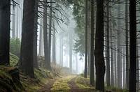 Coniferous Forest Surrounding in Sternwald Wind Farm. Upper Austria. Austria