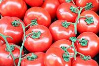 Italian tomatoes.