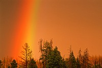 Rainbow over conifers at sunset, near Firehole River, Yellowstone National Park, Wyoming, USA.
