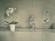 White Rose in a Vase Glass.