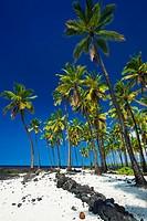 Coconut palms at Pu´uhonua O Honaunau National Historic Park (City of Refuge), Kona Coast, Hawaii USA.