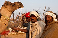 In the ground in Pushkar Camel Fair.