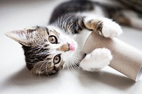 Cute kitten playing with a toilet roll.