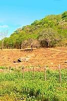 Deforestation, Paraiba, Brazil