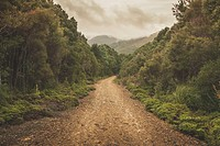Horizontal fine art landscape of a beautiful yet gritty dirt road running through an unspoiled green forest woodland. Photograph taken West Coast Rang...