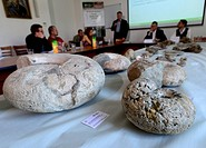 Representatives of the Czech Geological Survey presented the achievements of Czech paleontology and fossils collection from Antarctica at a press conf...