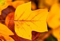 Golden autumn lea? background