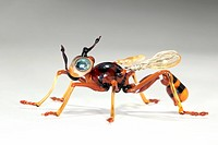 Wasp, glass sculpture made by artist Tomek Litwin. This sculpture was made using a blowtorch to heat glass at high temperature (around 800 degrees Cel...