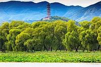 Yue Feng Pagonda Pink Lotus Pads Garden Willow Trees Summer Palace Beijing China.