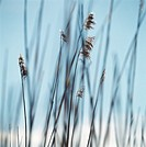 Close up of tall grass
