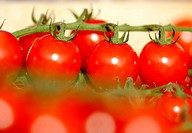 GERMANY, BONN, 02.10.2014, DEU , GERMANY : Tomatoes on a market - Bonn, NORTH RHINE-WESTPHALIA, Germany, 02/10/2014